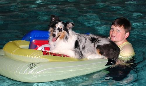 Beleive it or not, that looks like a happy Sheltie!