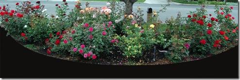 Roses Garden copy