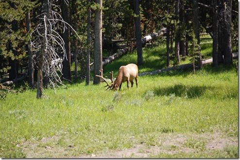 Elk-Sighting-#1-3