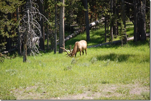 Elk-Sighting-#1-3